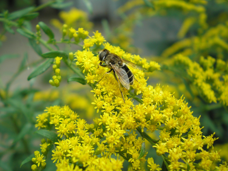 Отпугиватель для борьбы с мухами