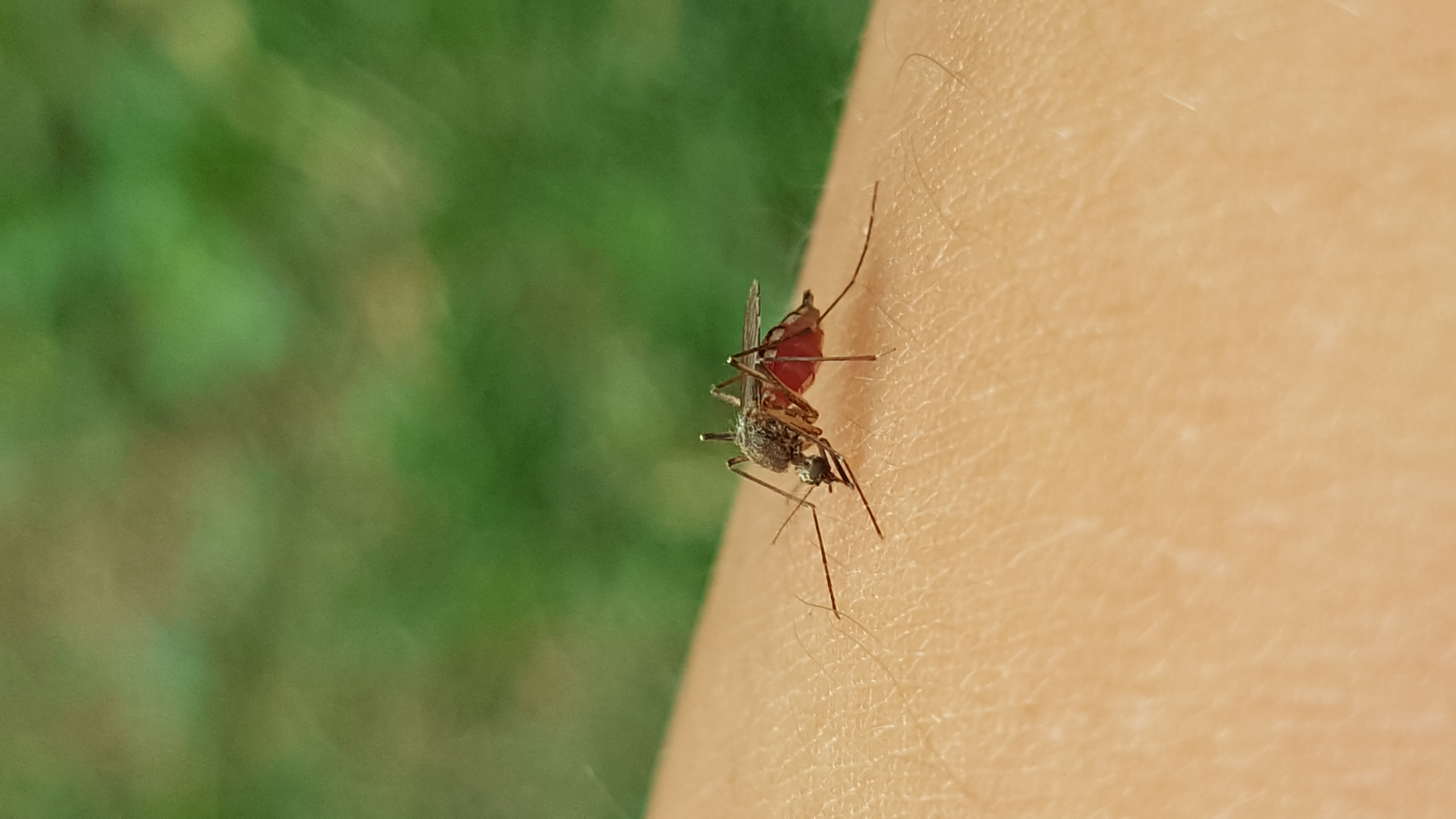 Отпугиватель для комаров
