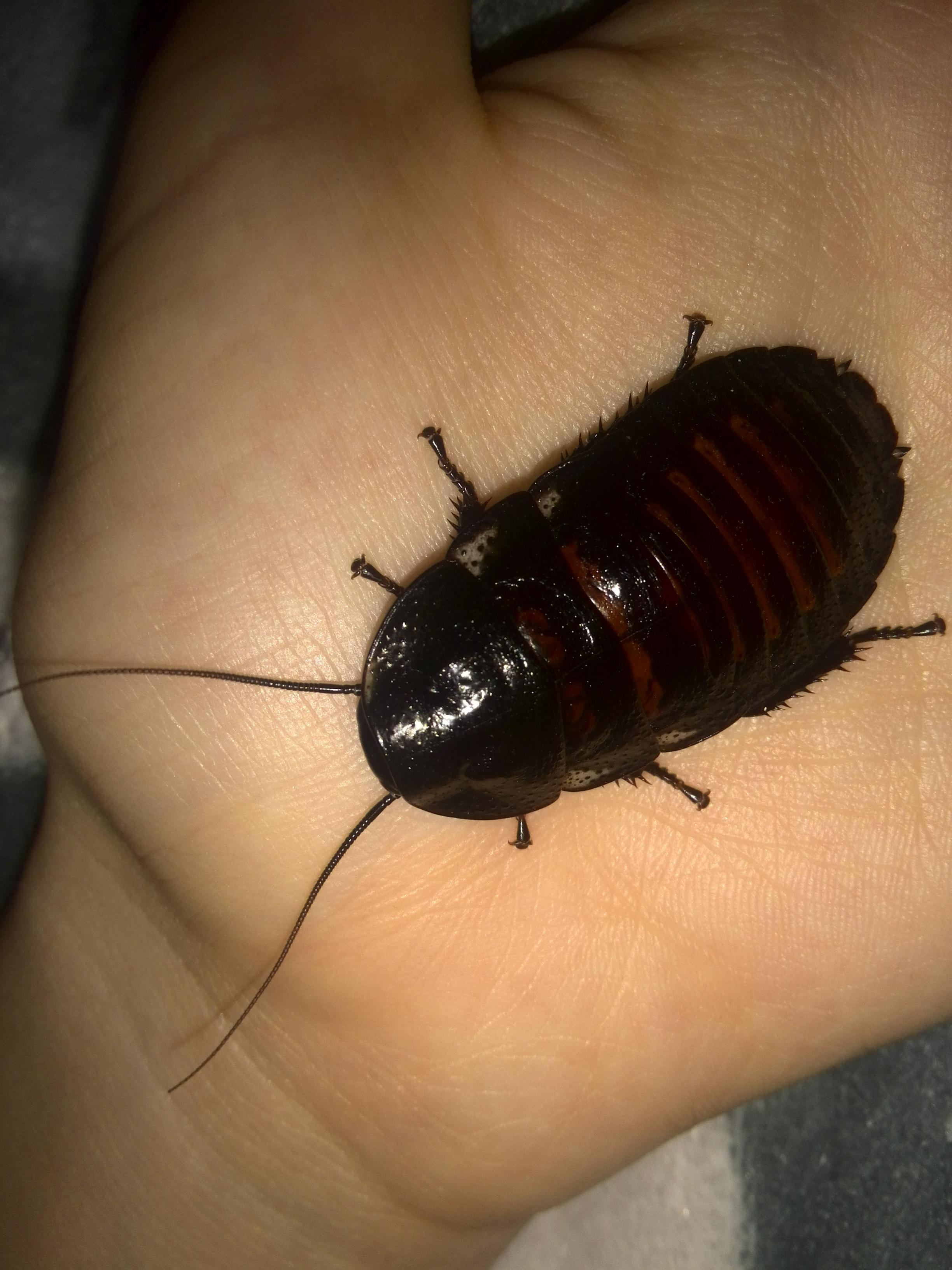 Прибор для борьбы с тараканами