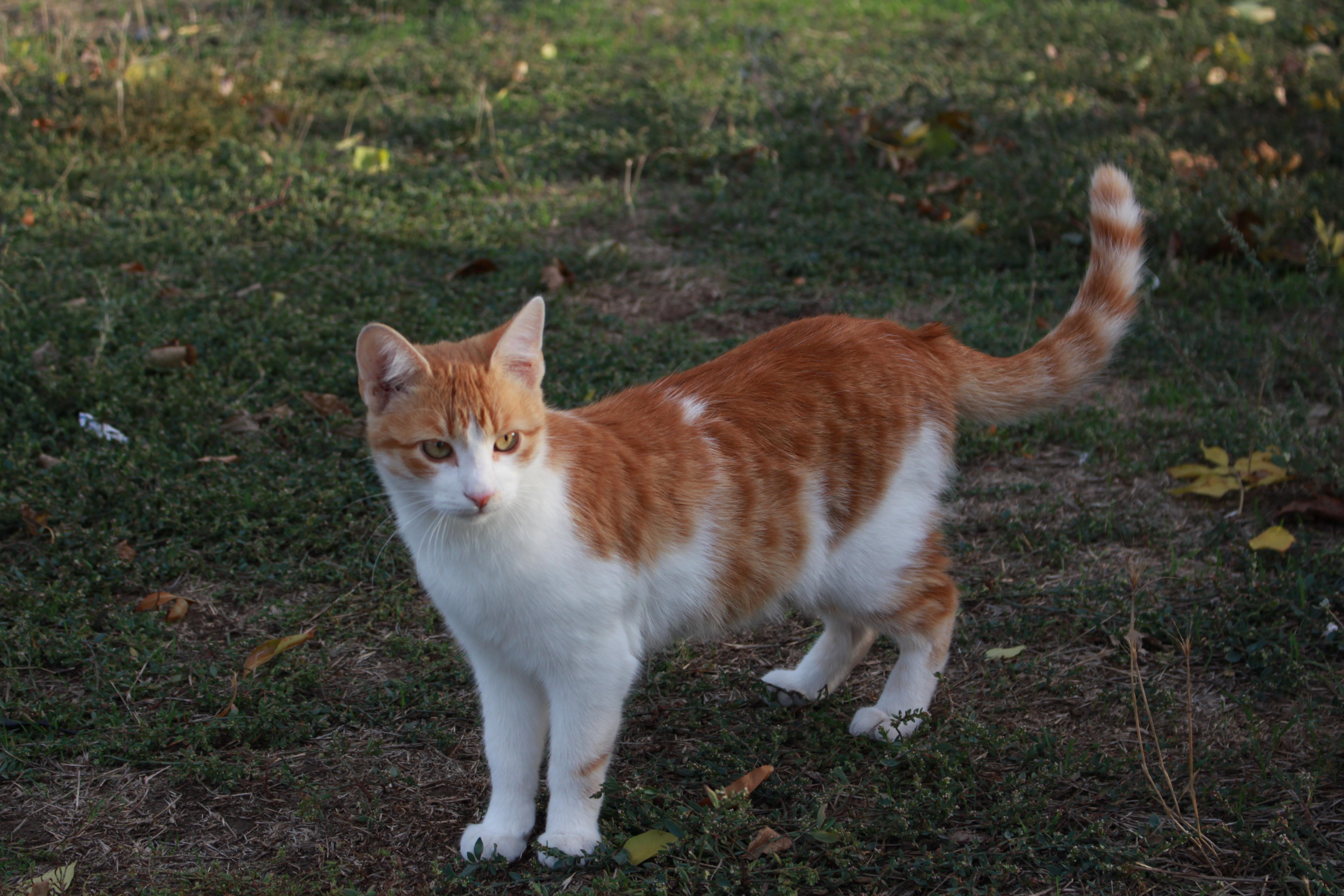 Кот для борьбы с кротами