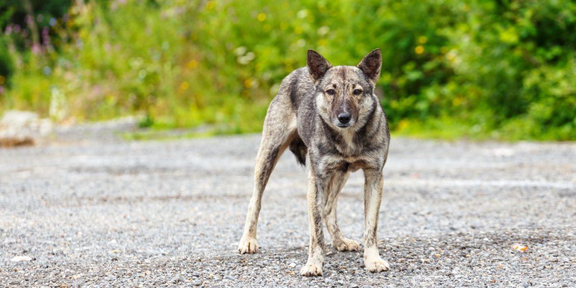 Магазин защиты от собак и личной обороны